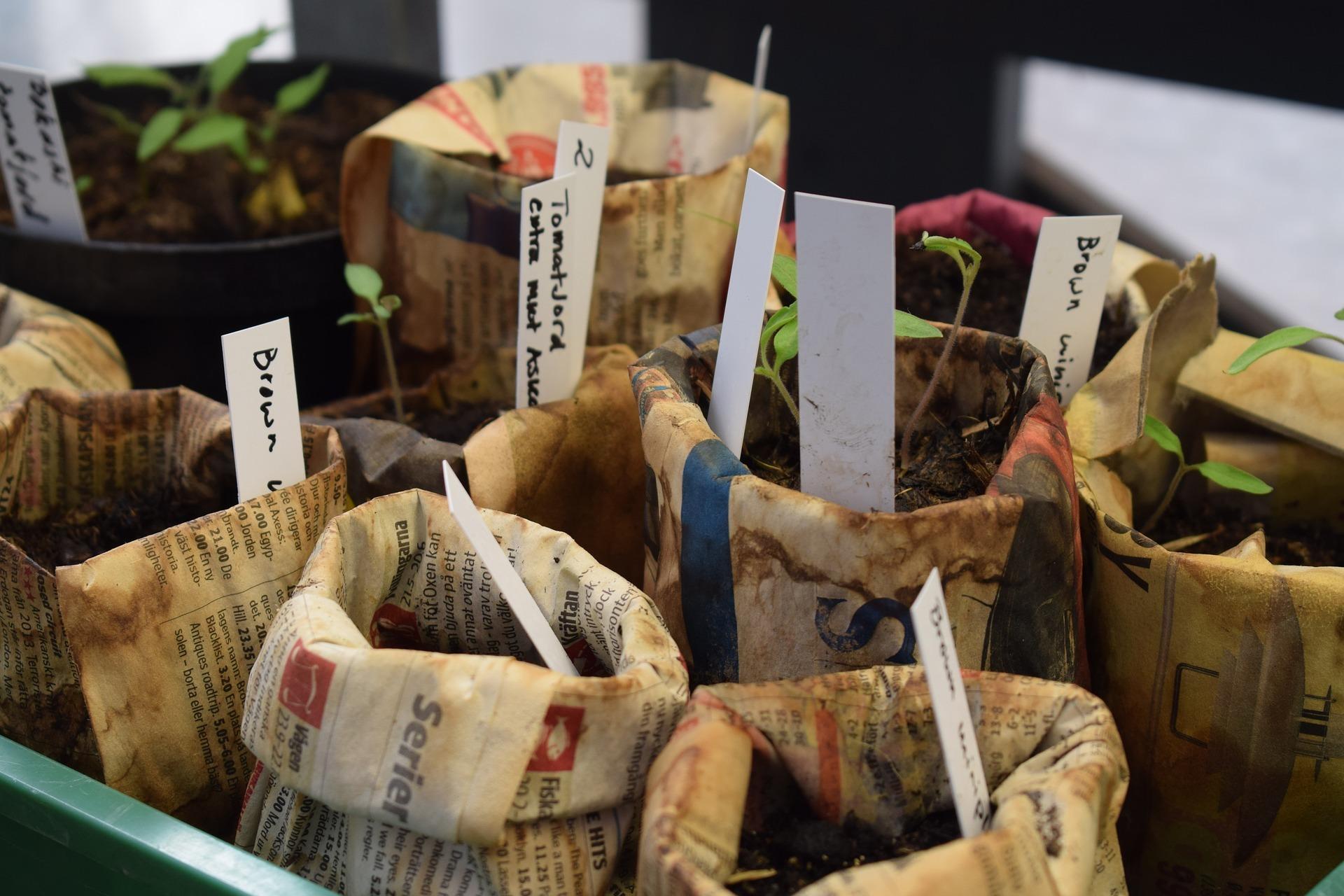 Köpa växter online